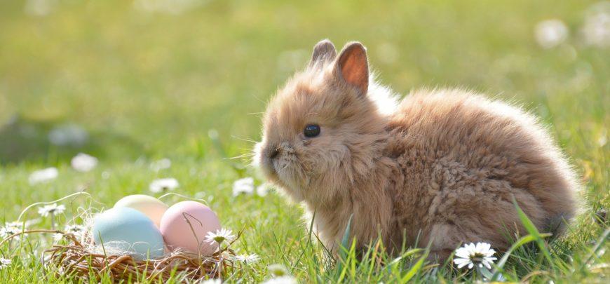 Storia del coniglio pasquale